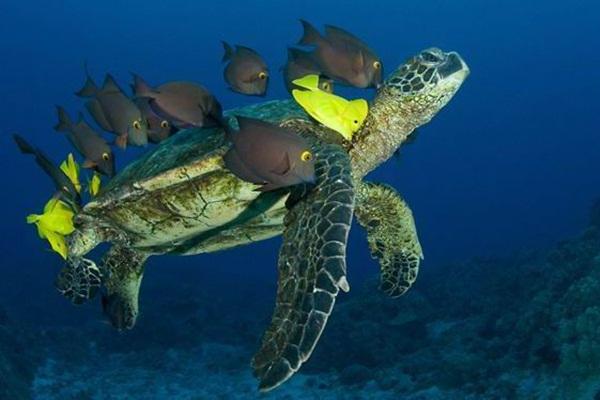 colorful-marine-life-25-photos- (20)