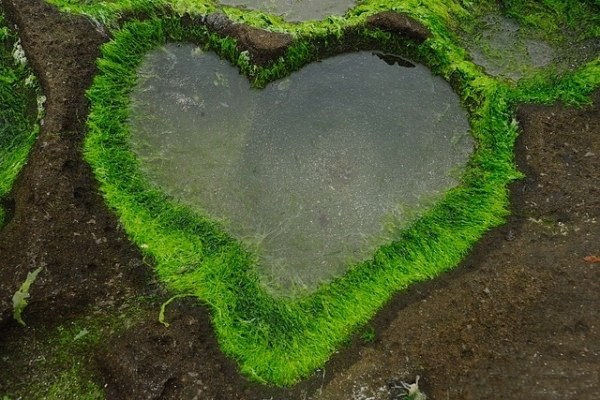 hearts-in-nature- (9)