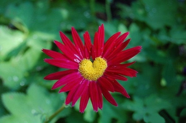 hearts-in-nature- (17)