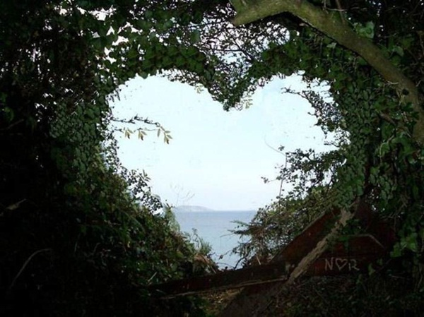 hearts-in-nature- (26)