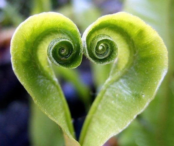 hearts-in-nature- (29)
