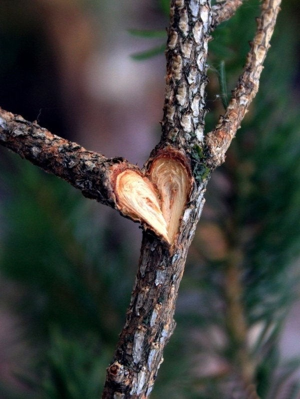 hearts-in-nature- (30)