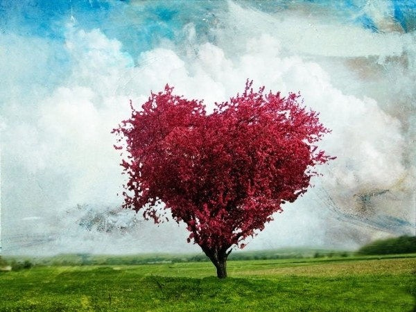 hearts-in-nature- (34)