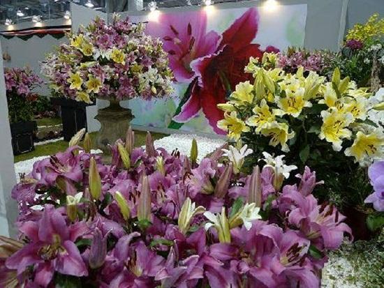 taipei-flora-exposition- (10)