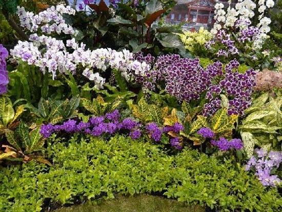 taipei-flora-exposition- (13)