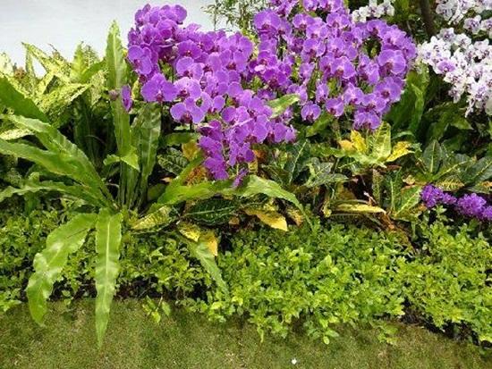 taipei-flora-exposition- (16)