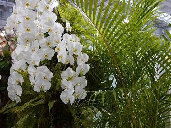 taipei-flora-exposition- (18)