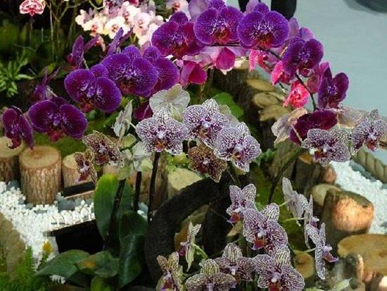 taipei-flora-exposition- (27)