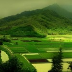 beautiful-green-nature- (6)