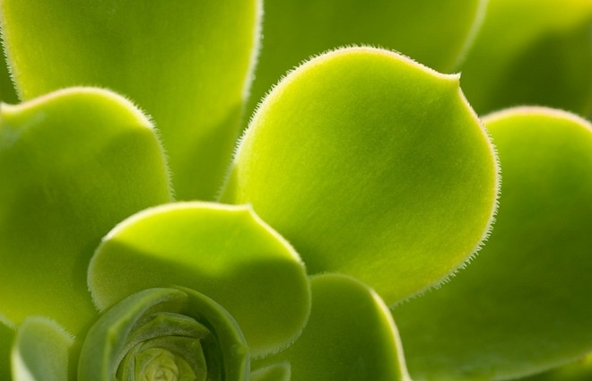 close-up-photography-23
