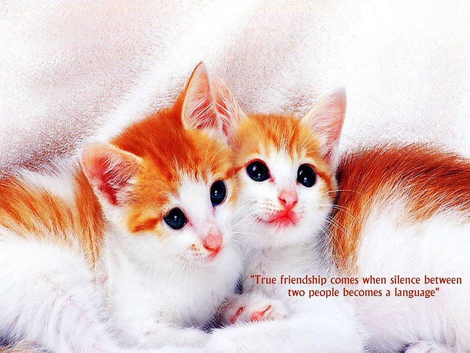 good-friendship-quotes- (5)