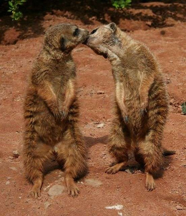 romantic-animals- (7)