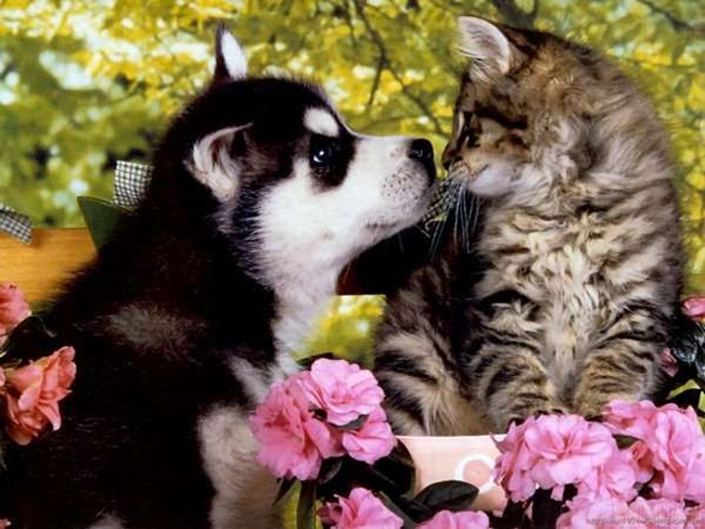 romantic-animals- (9)