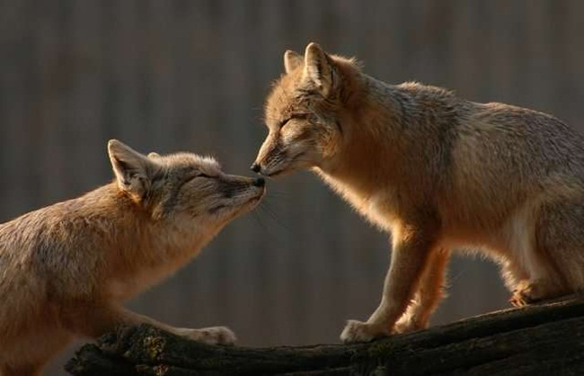 romantic-animals- (11)