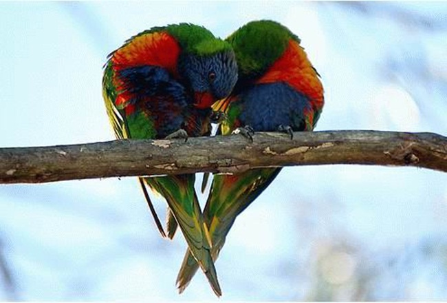 romantic-animals- (15)