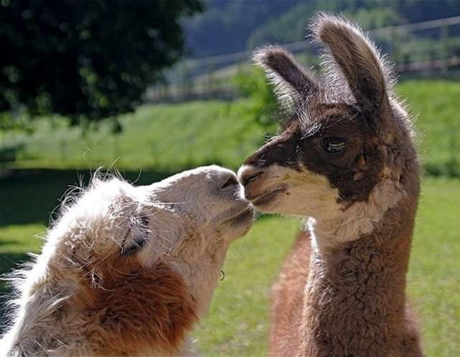 romantic-animals- (16)