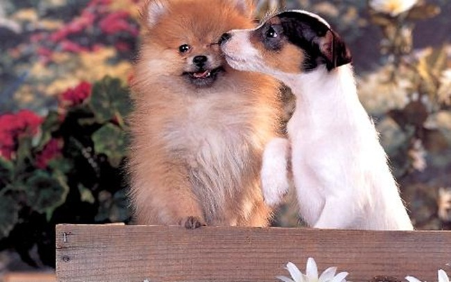 romantic-animals- (18)