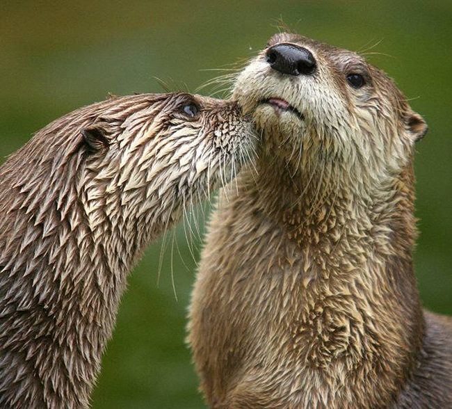 romantic-animals- (26)