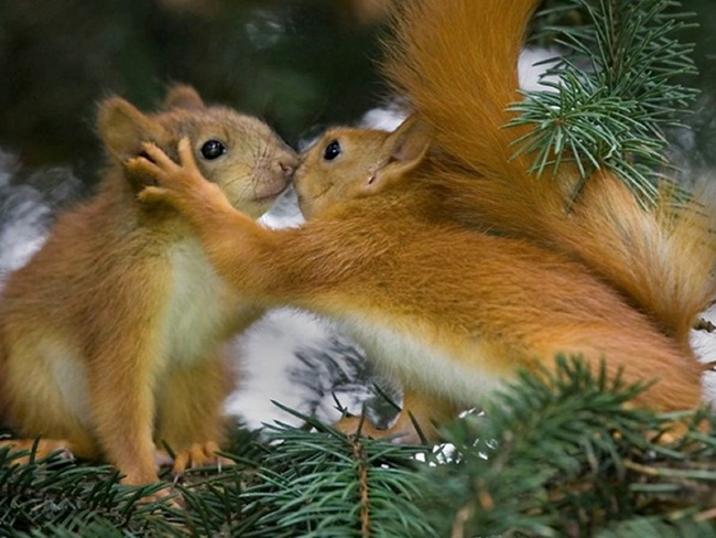 romantic-animals- (29)