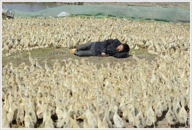 funny-chinese-sleep- (5)