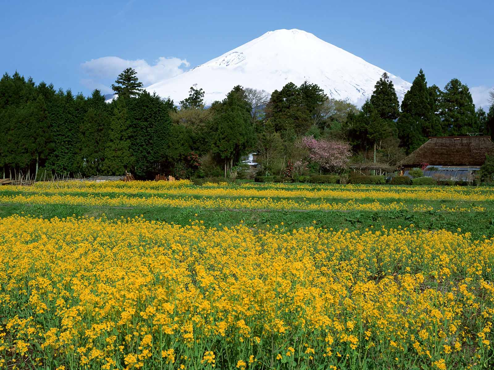 mount-fuji-wallpapers- (18)