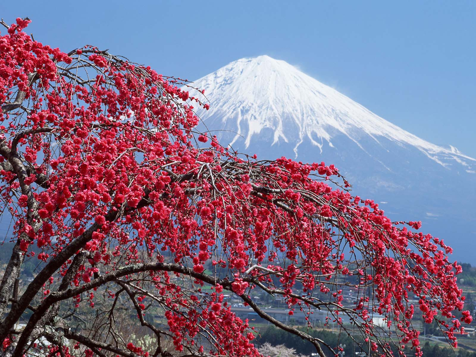 mount-fuji-wallpapers- (9)