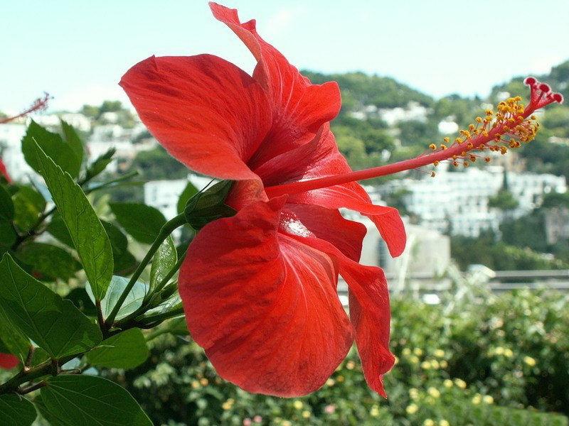 capri-island- (27)