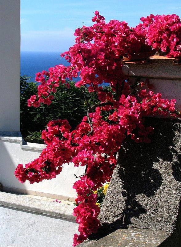 capri-island- (34)