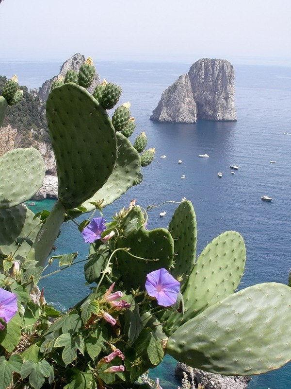 capri-island- (37)