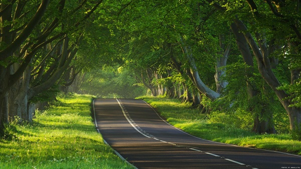 beautiful-roads-of-the-world- (20)