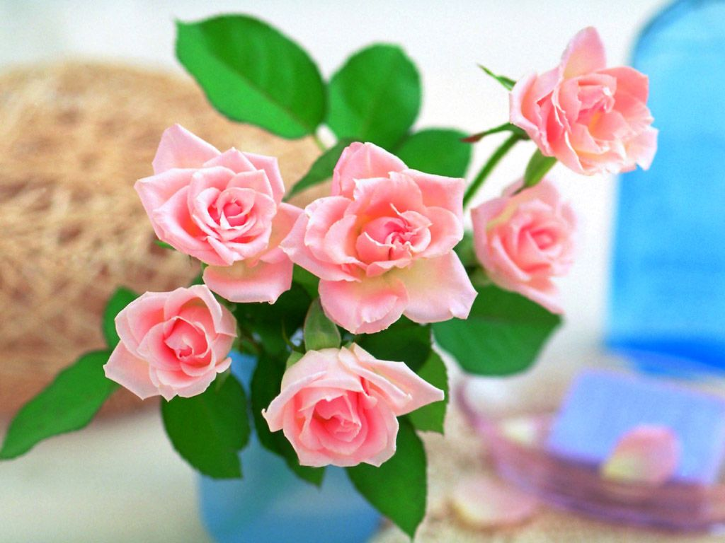 beautiful-roses-wallpapers-20-photos- (19)