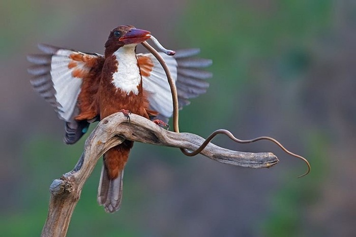 pictures-of-birds-after-successfully-hunted-their-food- (8)