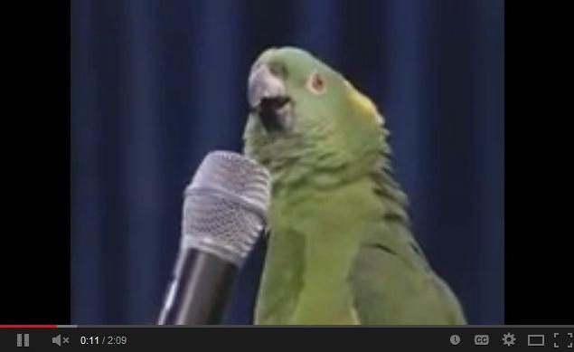 singing-parrot-video-