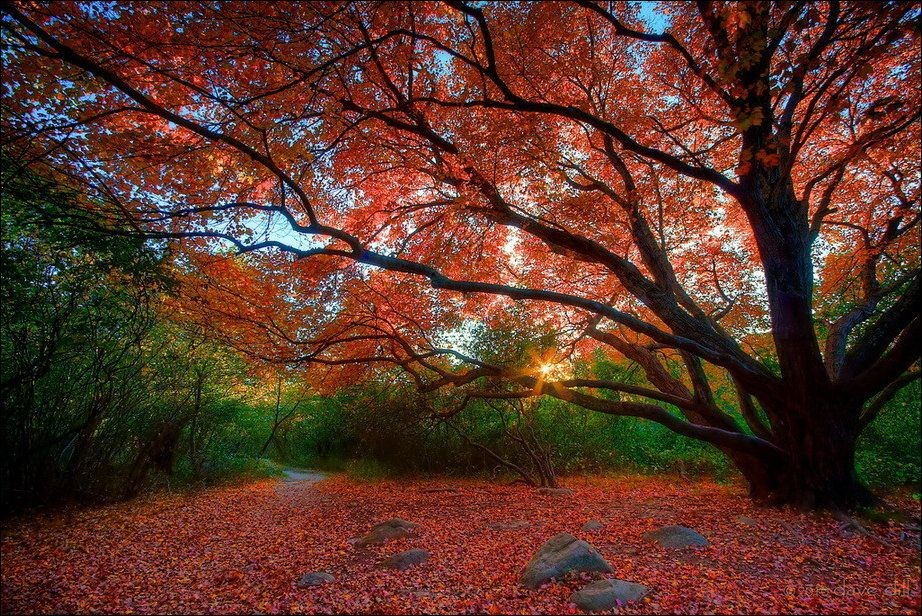 beautiful-autumn-wallpapers- (3)
