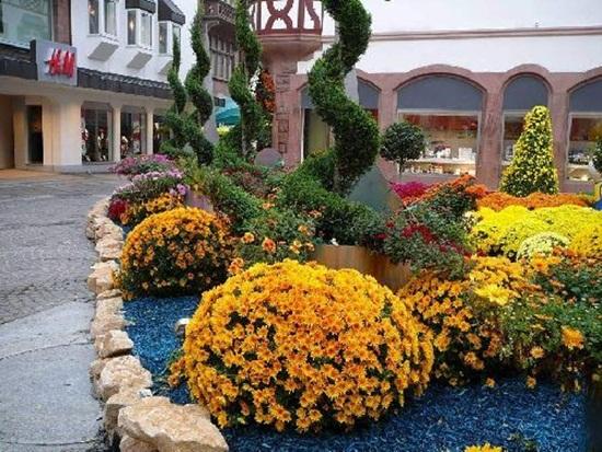 chrysanthemum-flowers- (3)