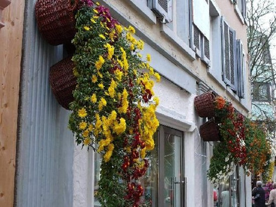 chrysanthemum-flowers- (7)
