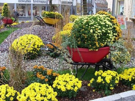 chrysanthemum-flowers- (8)