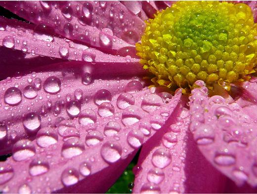 dew-drops- (13)