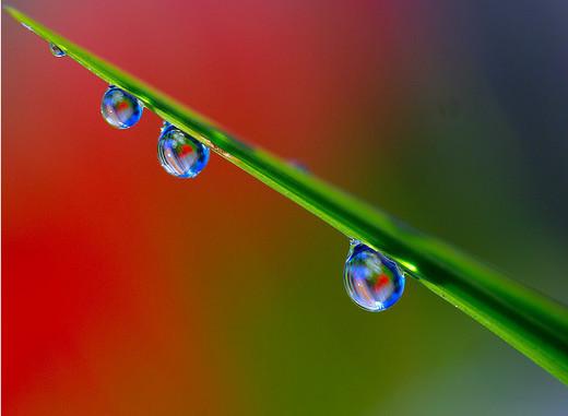dew-drops- (23)