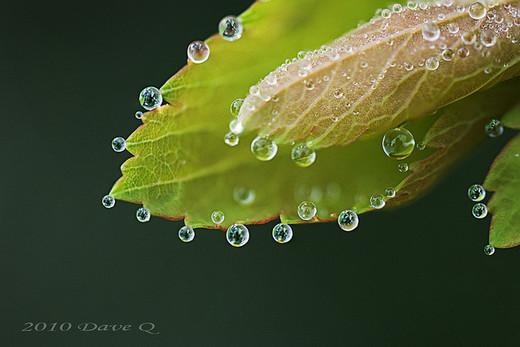 dew-drops- (25)