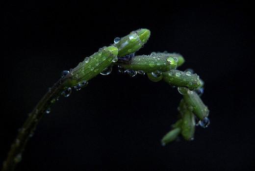 dew-drops- (30)