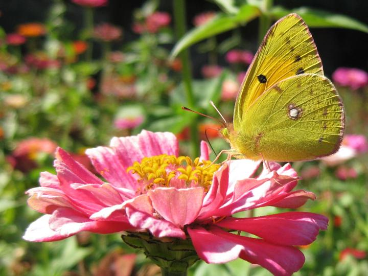 flowers-and-butterfly- (10)