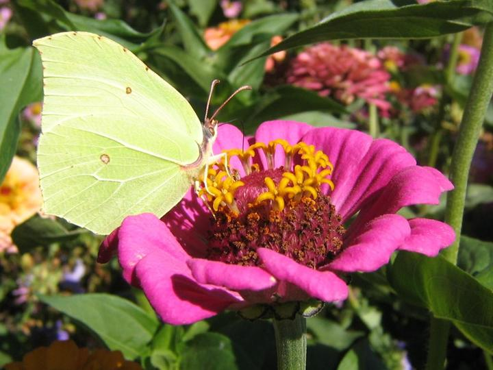 flowers-and-butterfly- (12)