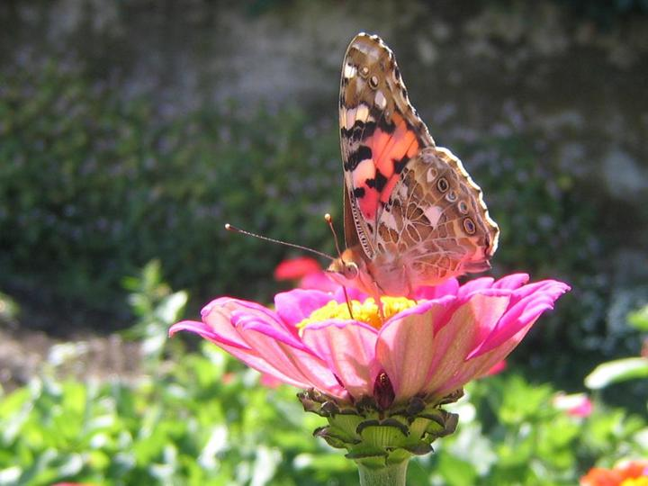 flowers-and-butterfly- (2)