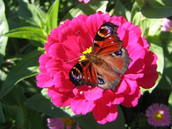 flowers-and-butterfly- (25)