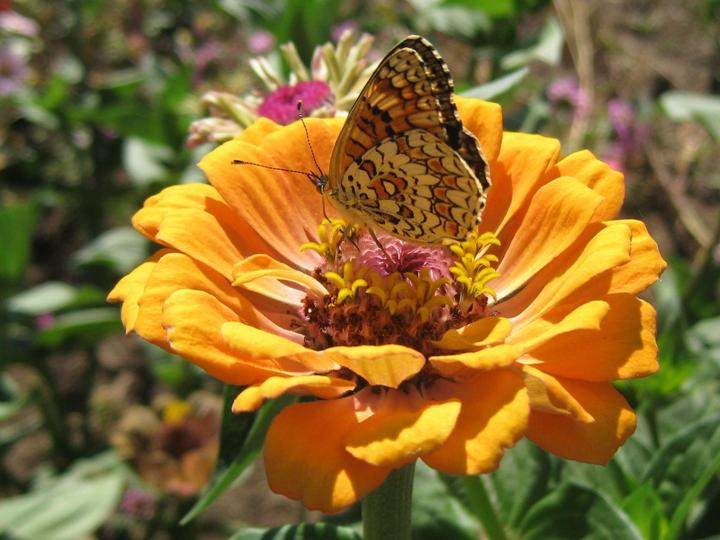 flowers-and-butterfly- (3)