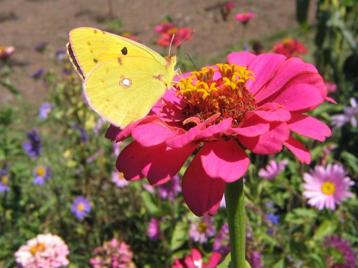 flowers-and-butterfly- (9)