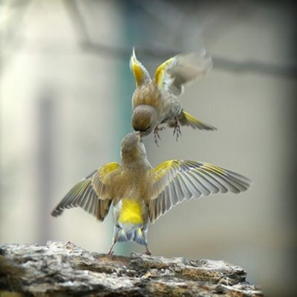 love-birds-kissing- (17)