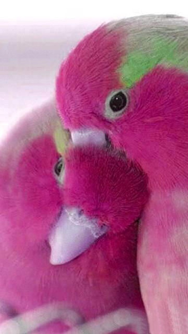 love-birds-kissing- (31)