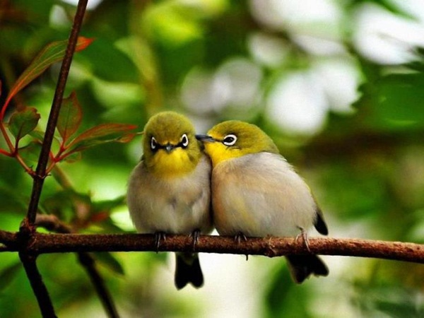 love-birds-kissing- (36)